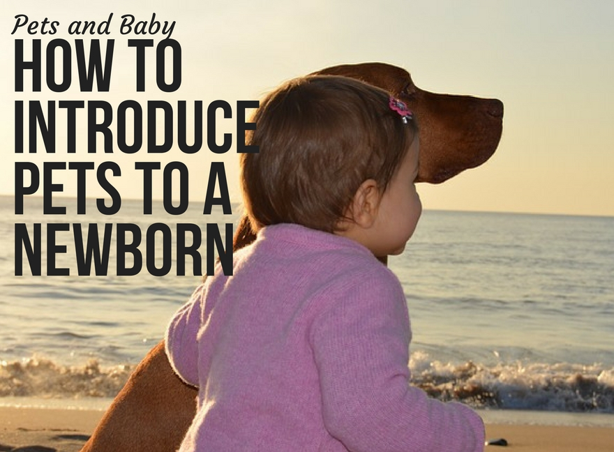 Pets and Baby: How to Introduce Pets to a Newborn