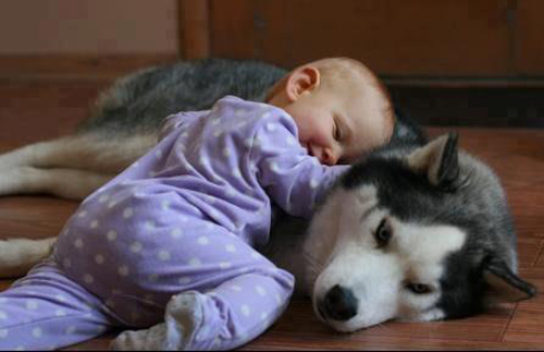Baby and Husky