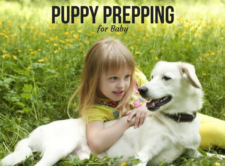 Puppy Prepping for Baby