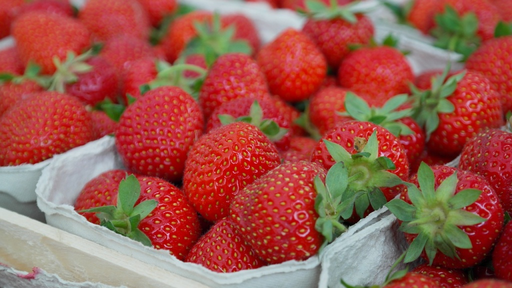 eat strawberries during pregnancy for brain development