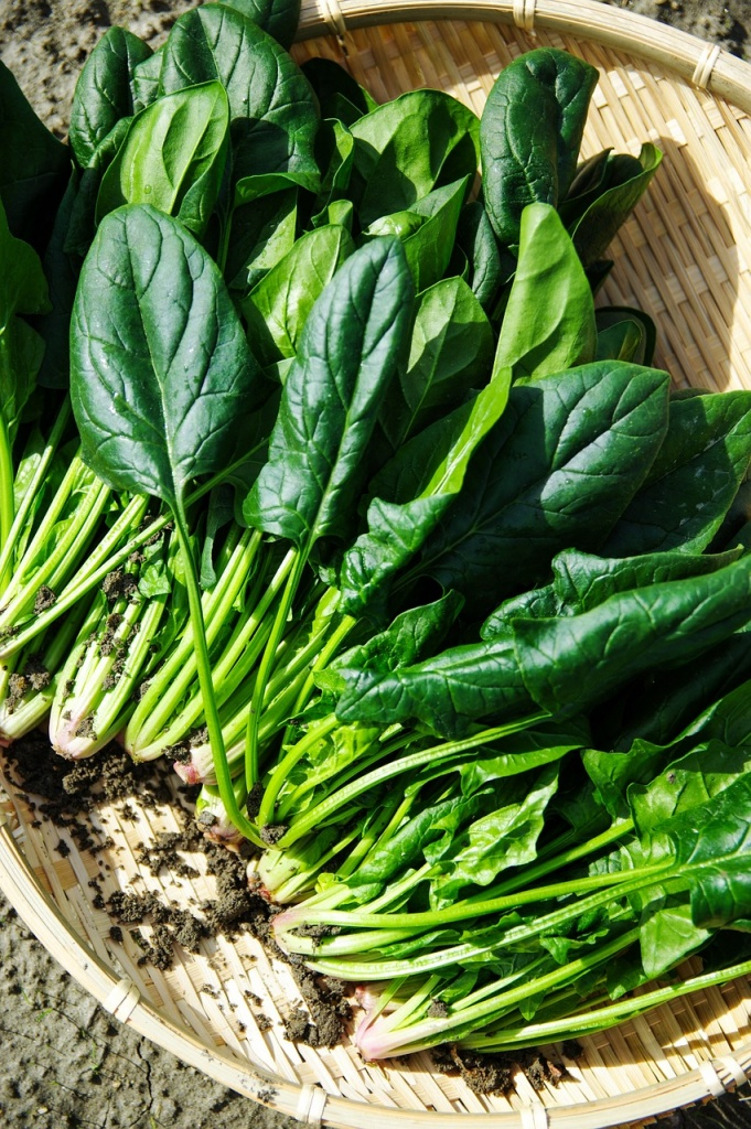 spinach foods to eat during pregnancy for brain development