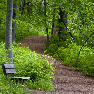Forest trail to go Hiking on While Pregnant