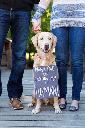Christmas pregnancy announcement with dogs