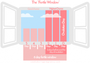 Fertile Window